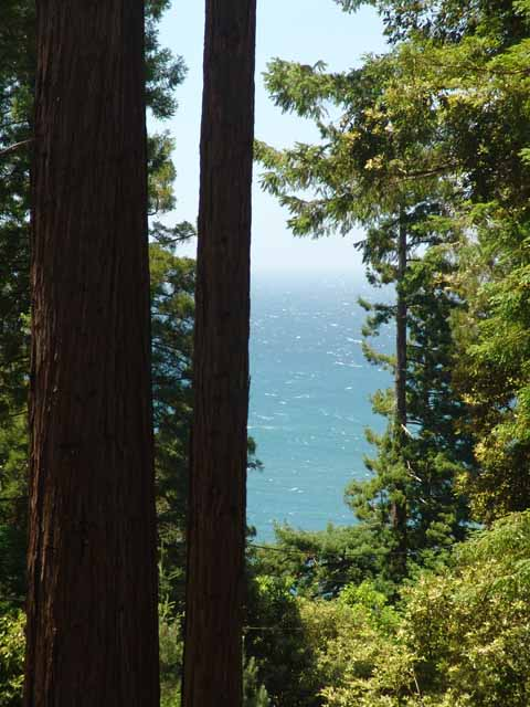 Deep Blue Redwood View